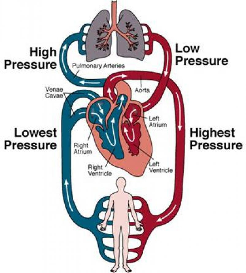 Circulation Diagram